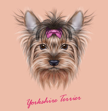 Yorkshire terrier Dog animal cute face. Illustrated adorable happy Yorkshire girl puppy head portrait with bow accessory. Realistic funny fur portrait of Yorkshire dog isolated on beige background.