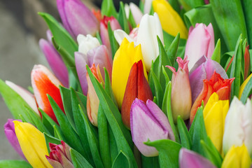Close up image of colorful tulip buds.