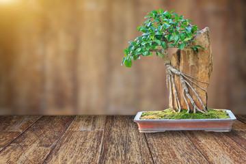 Bonsai tree in a ceramic pot on a wooden floor.