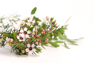 Beautiful blooming spring flowers isolated on white. Pink and White spring flowers background