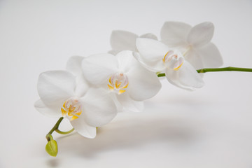 white flowers on a white background