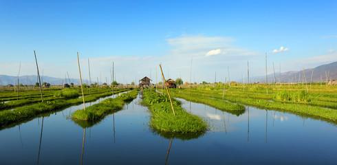 Floating gardens on Inle Lake in Myanmar