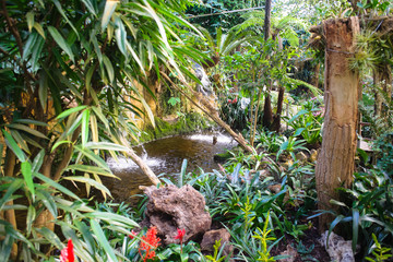 Wonderfull tropical garden with several rare orchids