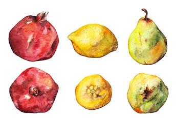 Watercolor pomegranate lemon pear fruit set isolated