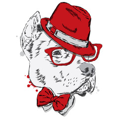 Pit bull in a hat and tie. Dog vector.