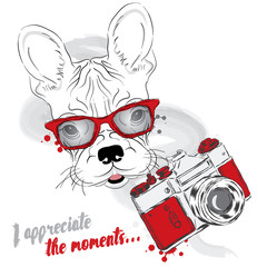 French bulldog with a camera. Dog vector. Hipster. Greeting card with a dog. Photographer.