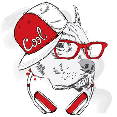 Pitbull in cap and headphones. Dog vector. Cool dog.