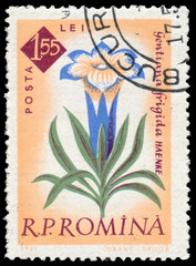 Stamp printed  in Romania shows flower Gentian