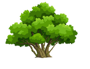 tree for cartoon