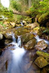 little waterfall in mountain forest