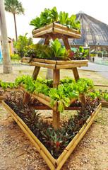Fresh organic vegetable in hydroponic vegetable field