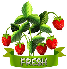 Fresh strawberries with sign