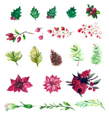 Vector Set of watercolor flowers and berries