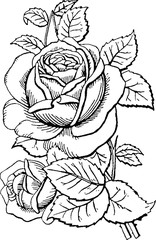 Vintage drawing rose