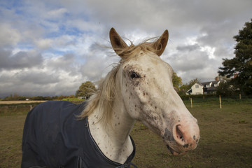 The horse in coat in the farmland