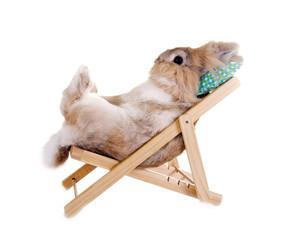 Kaninchen im Liegestuhl