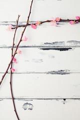 två kvistar med körsbärsblomma mot vit vintage bakgrund