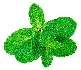 Fresh mint leaves isolated on a white background.
