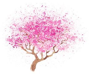 illustration of sakura