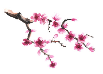 hand-drawn branch of sakura Wall mural