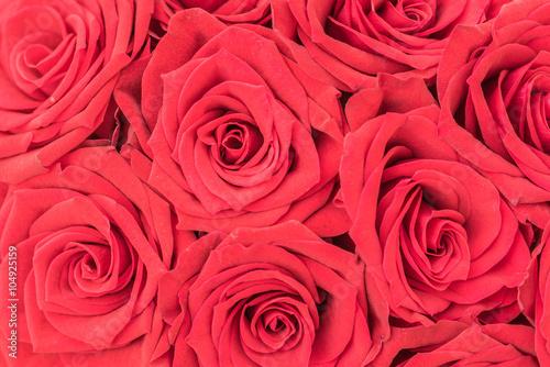 rote rosen bl ten hintergrund textur fotos de archivo e im genes libres de derechos en fotolia. Black Bedroom Furniture Sets. Home Design Ideas