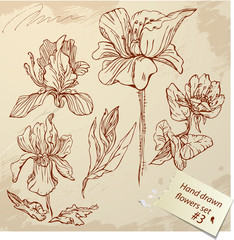Set of Vintage Realistic graphic flowers - hand drawn images.