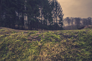 Wooden surface with moss