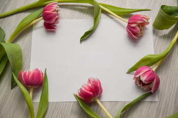 Beautiful frame of tulips