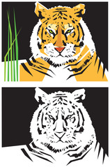 Stylized images of tiger