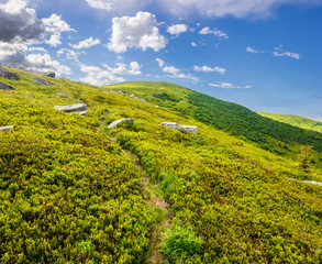 path through hillside with white boulders