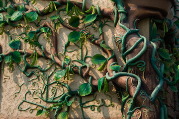 Green ivy plant on the old city wall sculpture by hand.