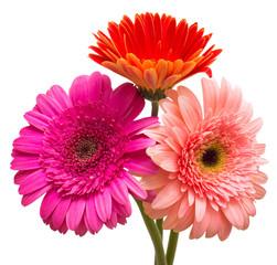Bouquet of flowers gerberas