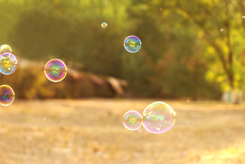 soap bubble on the summer background . beautiful bokeh