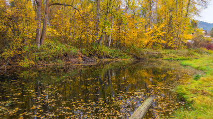 A small forest lake with fallen leaves and logs of trees in autumn