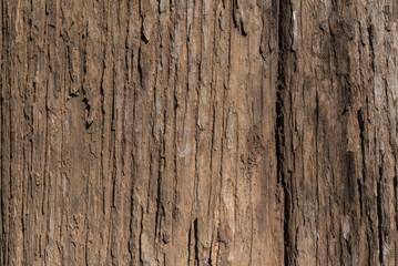 bark texture closeup