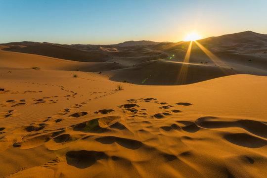 Sunrise over sand dune in the desert