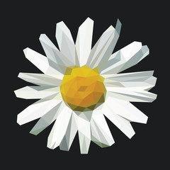 polygonal open flower with petals daisy on black