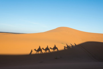 Camel shadow on the sand dune in Sahara Desert