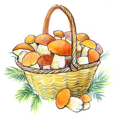 Basket with mushrooms. Hand drawing.
