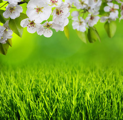 Spring blossom and grass