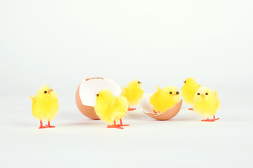 Chicken toy and egg shell isolated on white