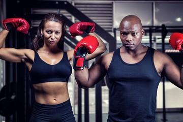 Composite image of portrait of boxers flexing muscles