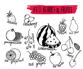 Vector illustration red berries and fruits  in hand drawn style. Isolated on white