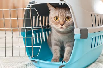 Cat inside pet carrier Fototapete