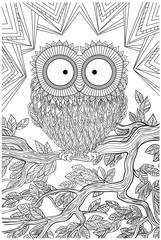 owl bird sitting on a branch