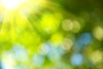 Beautiful nature blurred background. Green bokeh