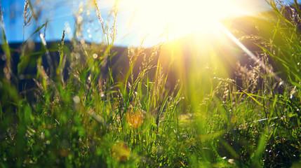 Beautiful nature landscape - Alpine meadow Fototapete