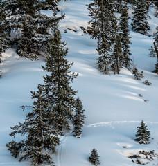 Wildlife Tracks Through Pristine Snow