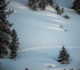 Single Animal Trail Through Fresh Snow