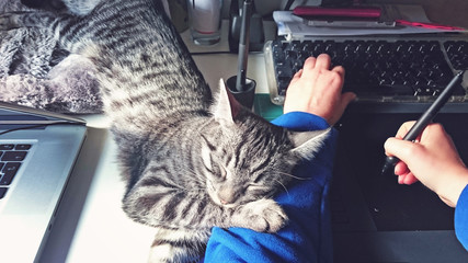 trustingly cat hugging her owner on his workplace